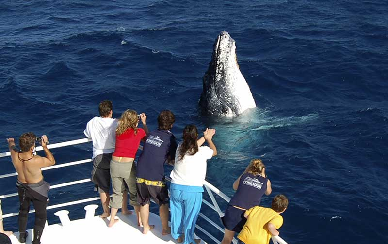 Whale Watching Port Douglas