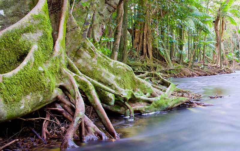 Daintree Port Douglas